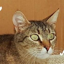 Кошка ЗОСЯ - фото 6589