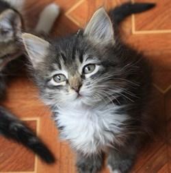 Кошка ВАСЁНА - фото 6643