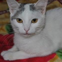 Кошка СИМА - фото 6695