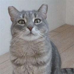 Кошка ХАННА - фото 6709