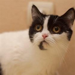 Кошка КИМ - фото 6717