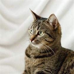 Кошка ЛИЗА - фото 6754