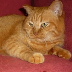 Кошка СОНЯ - фото 6778