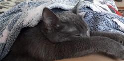 Кошка на Станкостроителей - фото 6851