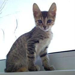 Кошка КРАСОТКА - фото 6883