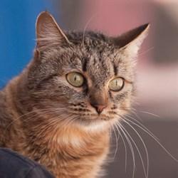 Кошка АРЬЯ - фото 6898