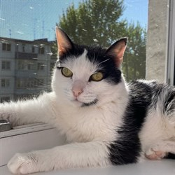 Кошка СОНЯ - фото 6909
