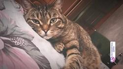 Кот Тимоша - фото 6957