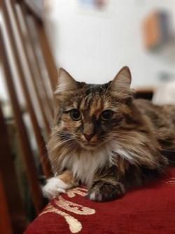 Кошка Джессика - фото 6961