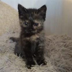 Кошка ТАТЬЯНА - фото 6966