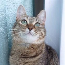 Кошка СИТОРА - фото 7140