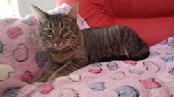 Кошка МЫШКА-МАЛЫШКА - фото 7150