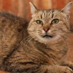 Кошка ТОМА - фото 7157