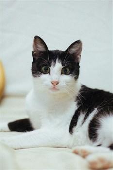 Кошка МЕРИ - фото 7273