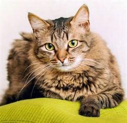 Кот на пер. Расковой - фото 7287
