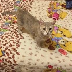 Кошка на Шолмова 45/1 - фото 7300