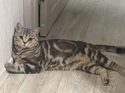 Кот на б-ре Архитекторов - фото 7317