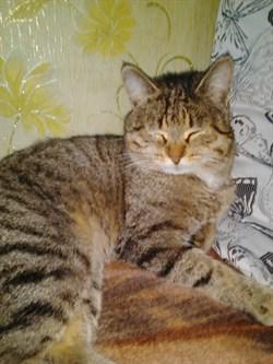 Кот Сёма на Скочилова - фото 7319
