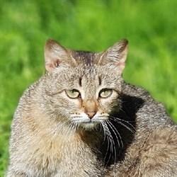 Кошка МАРФУША - фото 7358