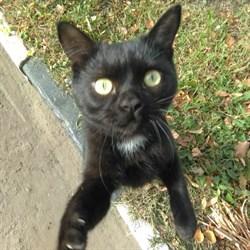 Кот на Терешковой - фото 7363