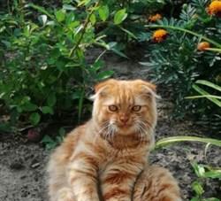 Кот в СНТ Юбилейное - фото 7373