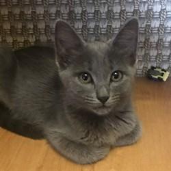 Кошка СВЕТА - фото 7375