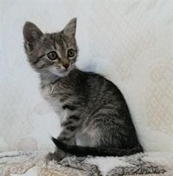 Кошка АНФИСОЧКА - фото 7413