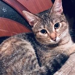 Кошка МИСТИ - фото 7542