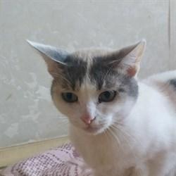 Кошка МАША - фото 7602
