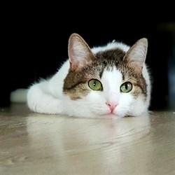 Кошка СЕРАФИМА - фото 7673