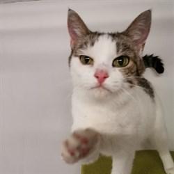 Кошка МАРУСЕНЬКА - фото 7731