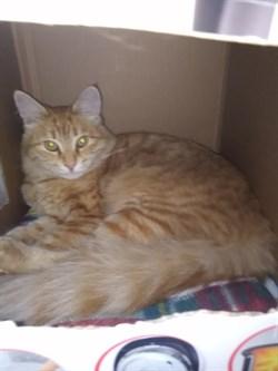 Кот в Винновке - фото 7741