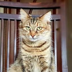 Кошка МАРУСЯ - фото 7753