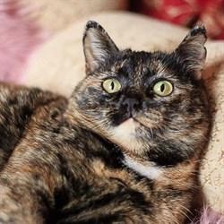 Кошка ФЕНЯ - фото 7765