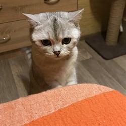 Кошка на Ливанова - фото 7789