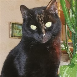 Кошка СОНЯ - фото 7851