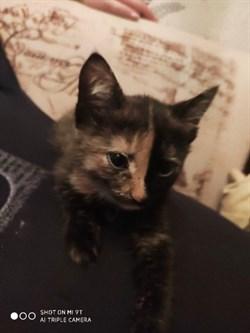 Кошка Буся на Тельмана - фото 7857