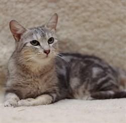Кошка ВЕСТА - фото 7874