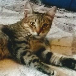Кошка АСЯ - фото 7886