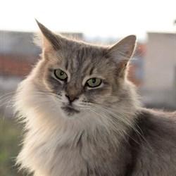 Кошка МИЛА - фото 7888