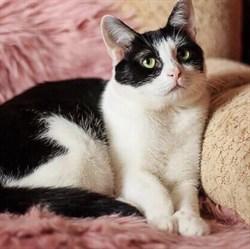 Кошка ЛИЗА - фото 7919