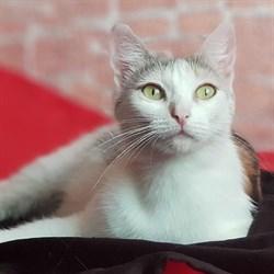 Кошка  МАДАМ - фото 7933