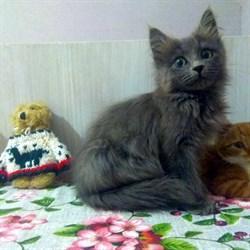 Кошка ЛАВАНДА - фото 7957