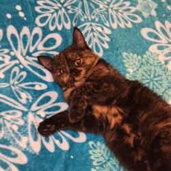 Кошка ЛОЛА - фото 7984