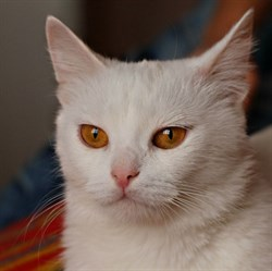 Кошка ТИНКИ - фото 8020