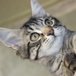 Кошка САНСА - фото 8060