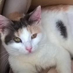 Кошка ШУРОЧКА - фото 8116
