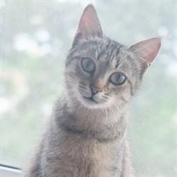 Кошка ЗАЙКА - фото 8174