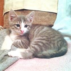 Кошка МИЛАШКА - фото 8193