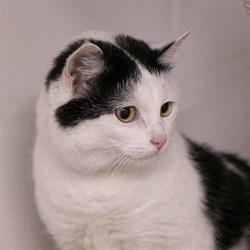 Кошка ТАСЯ - фото 8212